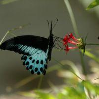 Šamanskí sprievodcovia: Motýľ