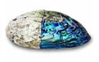 abalone-napoly.jpg