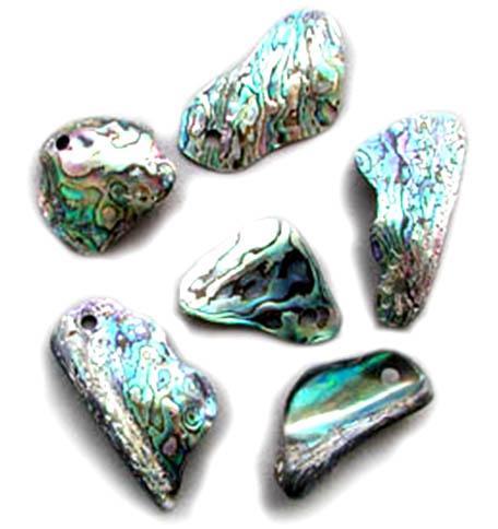 abalone-viac.jpg