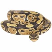 Šamanskí sprievodcovia: Had