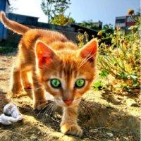 Šamanskí sprievodcovia: Mačka