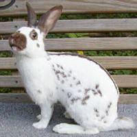 Šamanskí sprievodcovia: Zajac