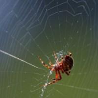 Šamanskí sprievodcovia: Pavúk