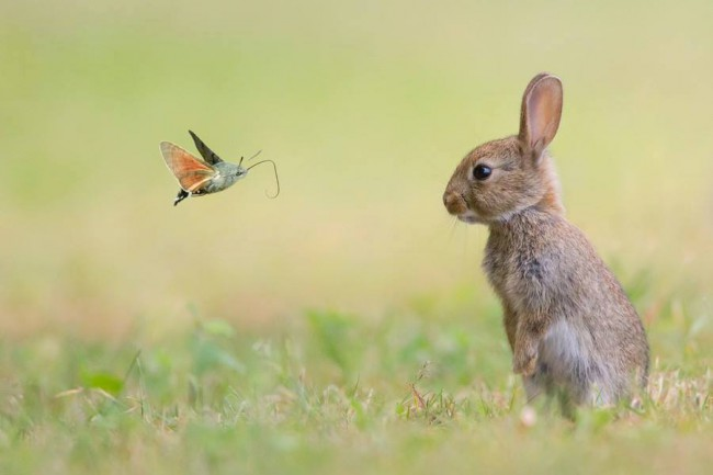 Rabbit and the butterfly by Stefanegautier