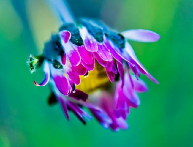 gt-kvetinka