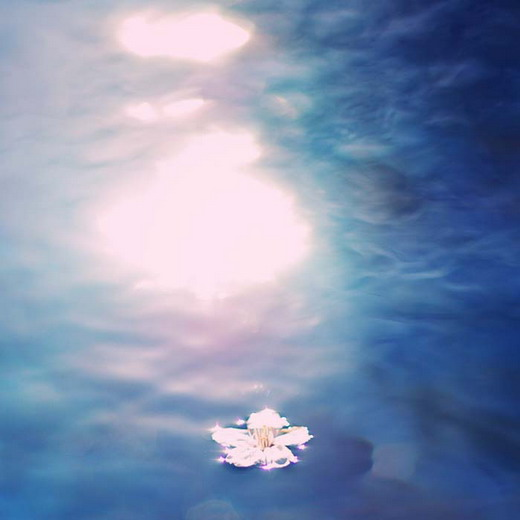 kvet na vode