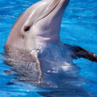 Dýchaj ako delfín