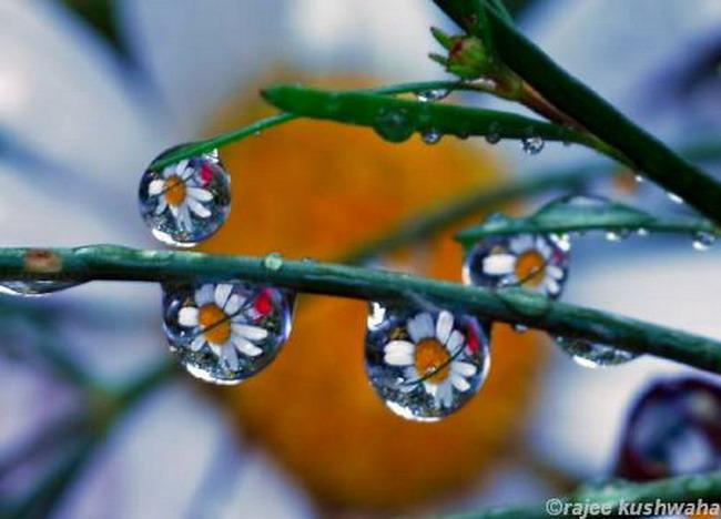 GT kvety v kvapkach vody