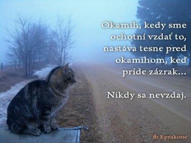 nikdy sa nevzdaj