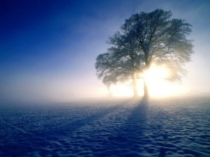 Winter_wallpapers_Winter_fog_011836_
