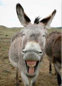 donkey_smile_photo_print-r6081909b483f4e3995ceb4f8813a75fa_fk95_8byvr_512