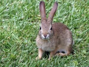 rabbit-photo-134