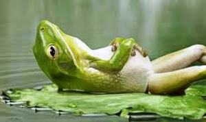 Relaxed-frog2