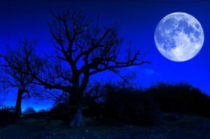 blue-moon-tree