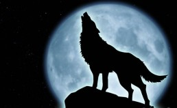 wolf-howling-silhouette-sitting