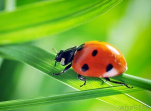 ladybug-on-plant