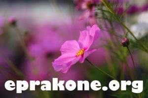 eprakone.org
