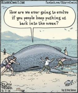 whale-evolution-fail-humor
