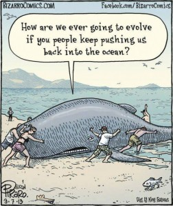 whale-evolution-fail-humor