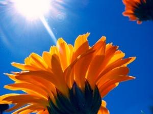 2012-07-24-flowersinsun