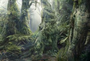 the-rainforest-of-hidden-animals-optical-illusion