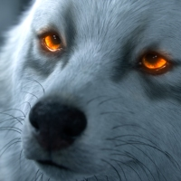 10 zvierat a čo značí, keď vám skrížia cestu